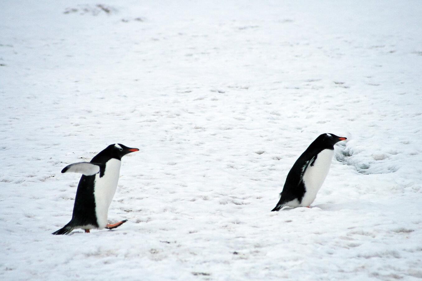 ペンギンアップデート4.0についての考察の画像